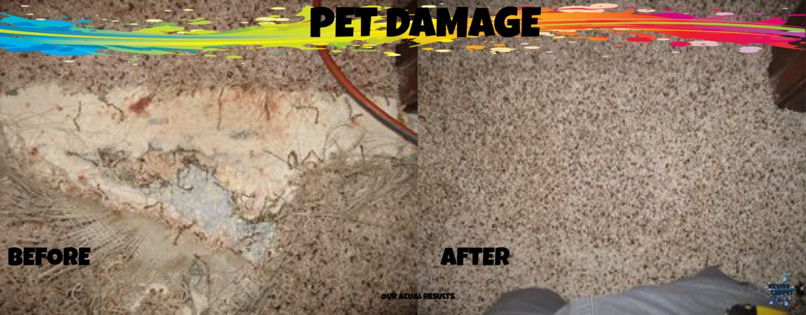 Pet Damage banner
